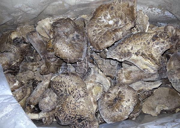 금광무역냉동능이버섯