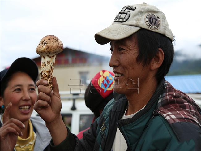 금광무역 냉동송이버섯